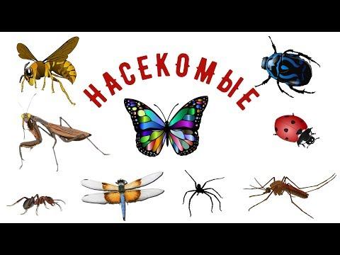 Вопрос: Что за насекомые на фотографии?