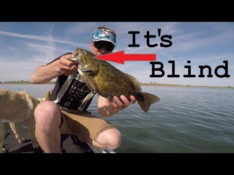 Bed Fishing Aggressive Smallmouth Bass *Moses Lake WA*