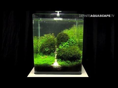Aquascaping - The Art of the Planted Aquarium 2013 Nano pt.1