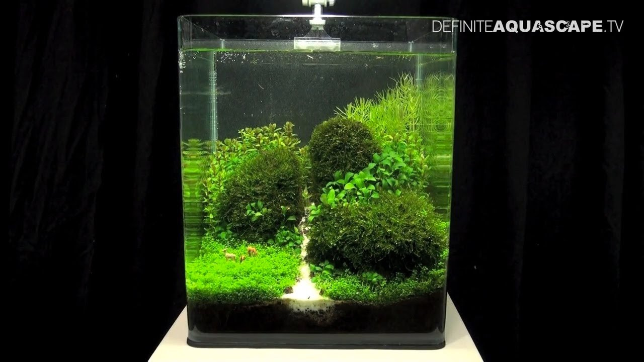 Aquascaping the art of the planted aquarium 2013 nano pt for Aquarium boule 20 litres