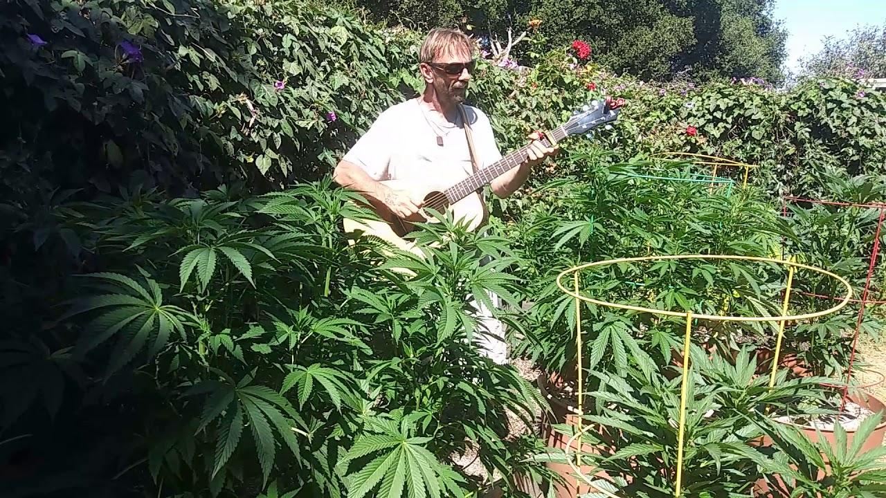 Ютуб конопля видео выписывают ли в россии марихуану