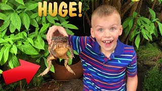 Mommy, Can I Keep It?! Chris Finds a HUGE Frog!
