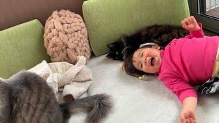 まるで娘の妹のように暮らす猫 ラガマフィン A cat that lives like a daughter's sister