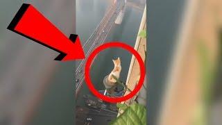Умная кошка дурачила спасателей 6 дней, а они ничего не могли сделать
