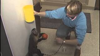 Monkey See, Monkey Do, Monkey Bloopers – Training Monkeys To Help The Disabled
