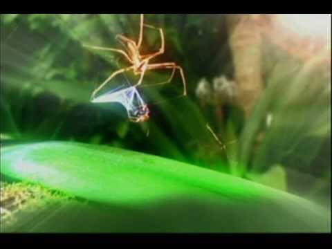 I'm a celebrity cut spider web catch