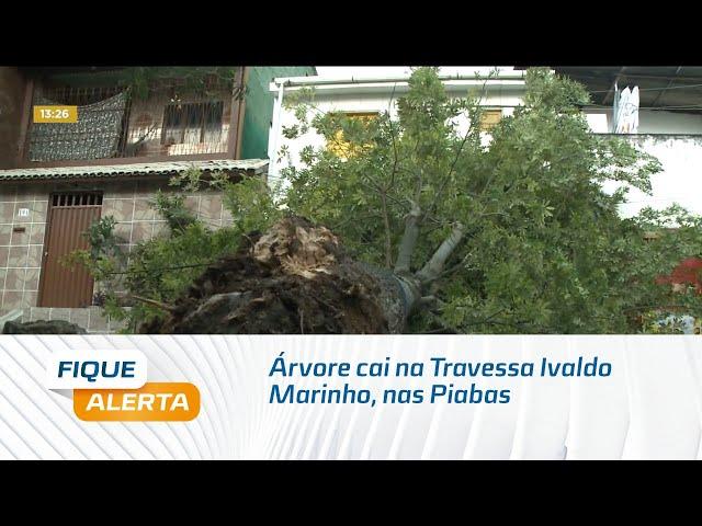 Árvore cai na Travessa Ivaldo Marinho, nas Piabas