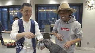 『AFLOAT 宮村浩気がトリミングに初挑戦!! 』《ミニチュアシュナウザー 後編》
