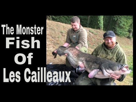 **Carp And Cats **Monster Fish In France At Les Cailleaux