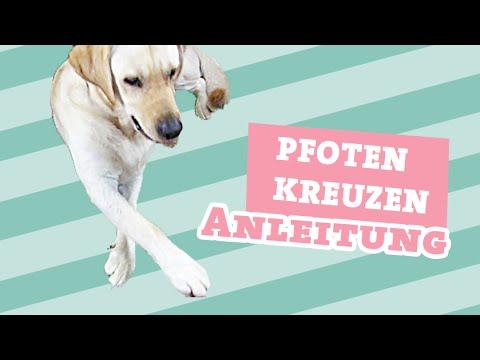 Hund Pfoten kreuzen beibringen | Hunde Tricks beibringen Hundetrick