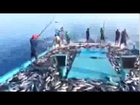 настоящая рыбалка скачать игру