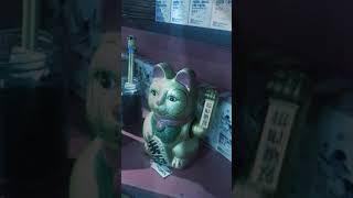 Этот кот не продается