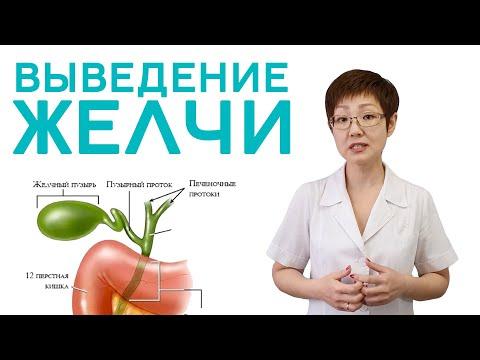 Выведение желчи | Доктор Ирина Мироновна