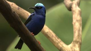 Explore the World of Birds and Biodiversity