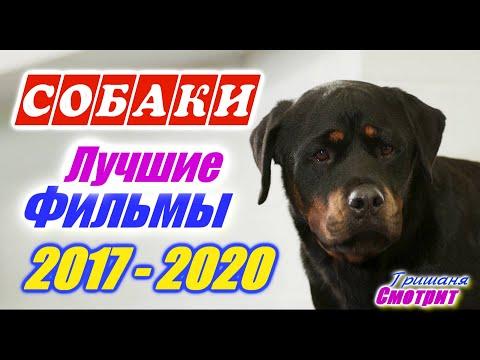 Собаки. Лучшие фильмы про собак. Фильмы про щенков. Фильмы про животных с 2017 по 2020 год