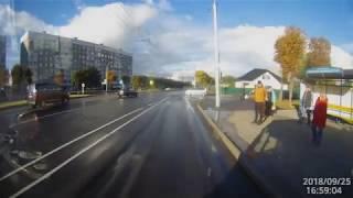 Умная собачка переходит дорогу по пешеходному переходу в Могилёве
