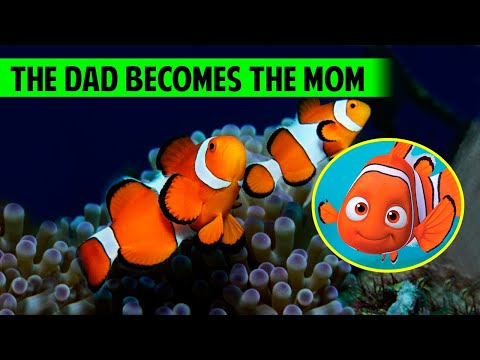 10 Facts About The CLOWNFISH You Didn't Know