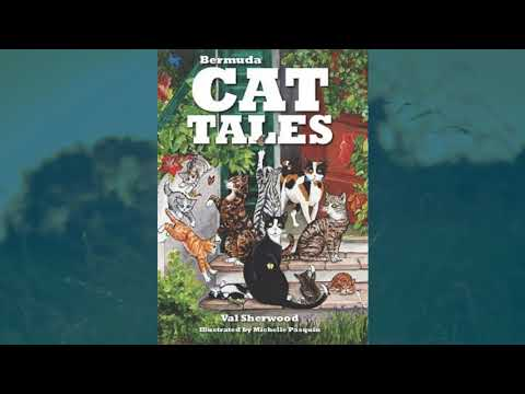 Bermuda Cat Tales, November 26 2018