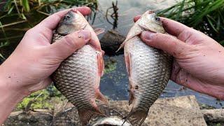 Крупный карась клюёт на каждом забросе Рыбалка на карася На эту насадку всегда клюёт карась