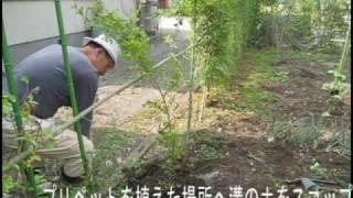 13年前に挿し芽したプリペットの垣根が昨年から枯れてきた。 10日前...