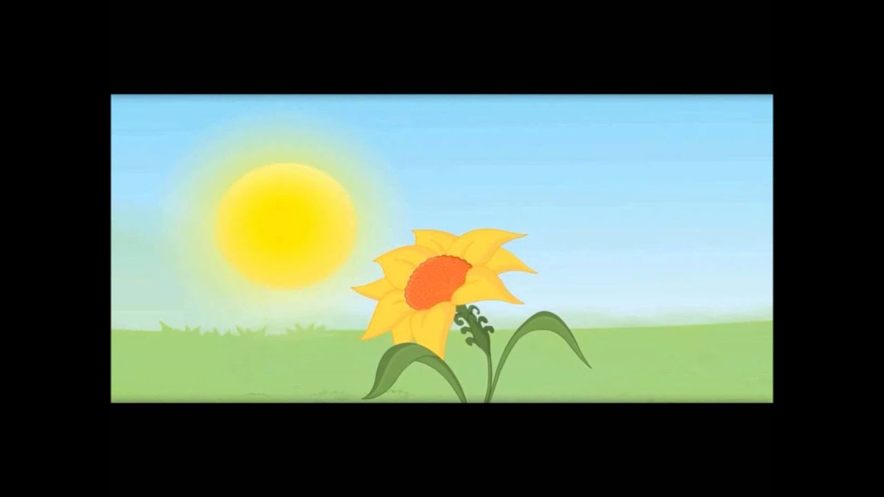 Plants show movement sunflower touch me not kids school education plants show movement sunflower touch me not kids school education video youtube izmirmasajfo