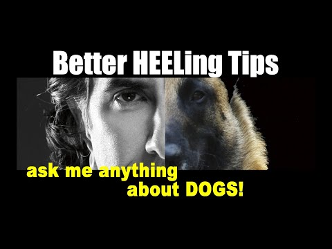 Better Heeling Tips - Dog Training Video - ask me anything