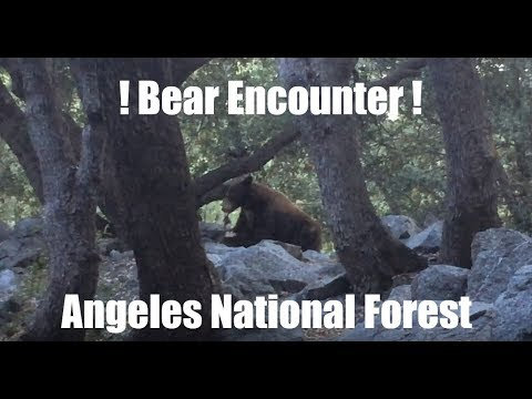 Solo Bear Encounter - Angeles National Forest