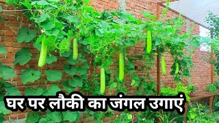 How to Grow Bottle Gourd at Home