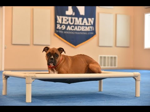 Mika (Boxer) Boot Camp Dog Training Video Demonstration