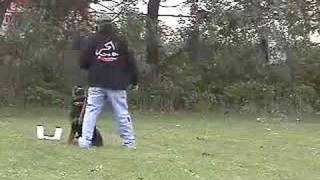 Rottweiler Forum   Sit Means Sit Dog Training