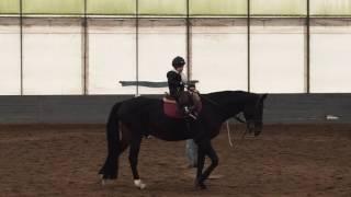 Урок 2. Остановка лошадки (лошадка Бруклин)