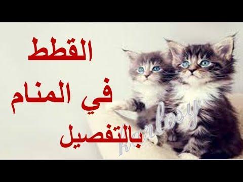 القطط في المنام بالتفصيل تفسير الاحلام القطط القطط للمتزوجة للحامل للعزباء السوداء البيضاء Youtube