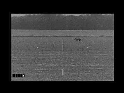 Coyote Miss -  Distance Underestimation