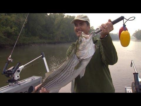 Wild SideTV-Cumberland River Striped Bass