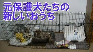 Ayachannelはかわいい元保護犬たちのたくさんの初めての体験をお届けし...