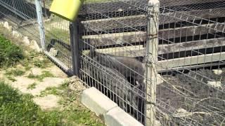 Wild Boar Farm