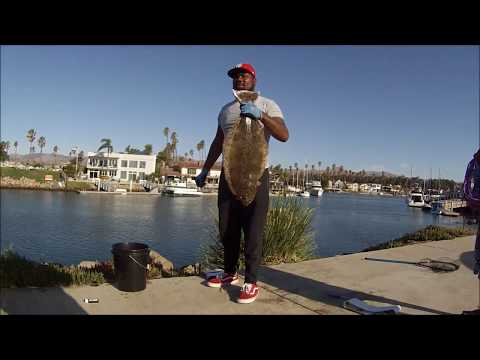 MONSTER HALIBUT !!! CAUGHT IN VENTURA CA