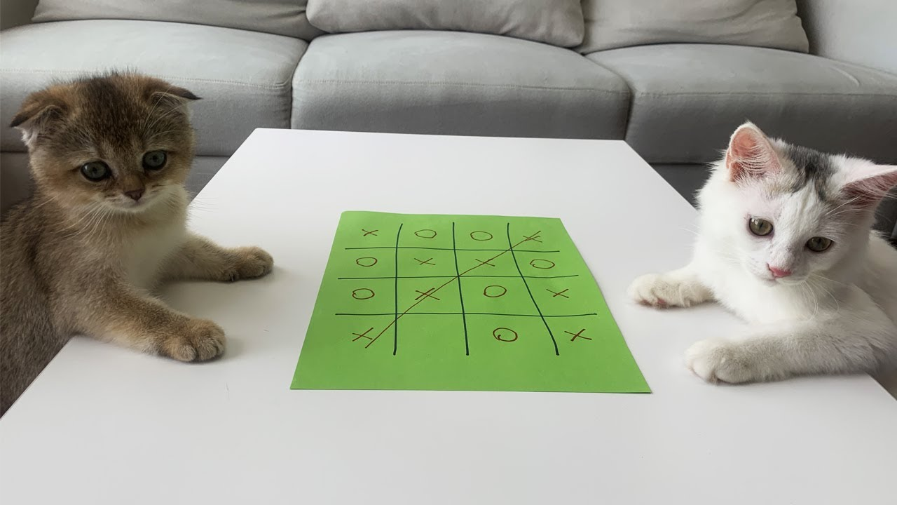 Cute Kittens Play Tic-Tac-Toe Game