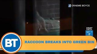 "Raccoon breaks into Toronto ""raccoon proof"" green bin"