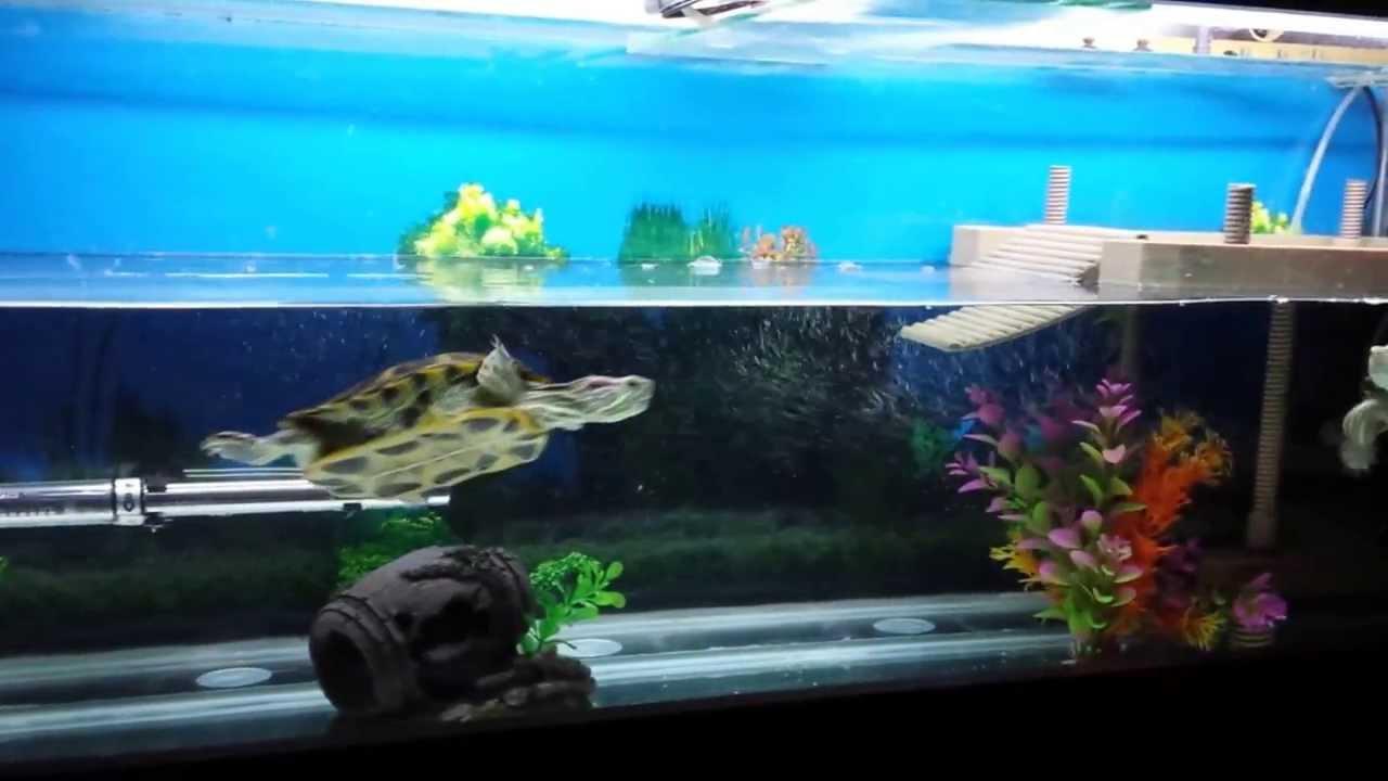 Nuevo acuario tortuguero youtube for Acuario tortugas