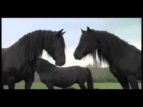 New World for Horses and Humans vlog