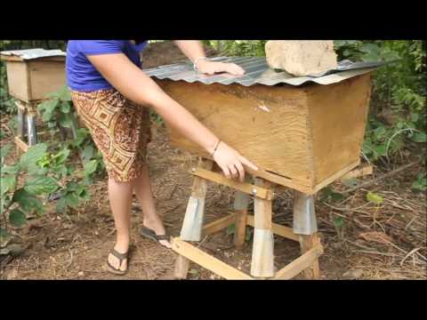 download How to Design an Apiary - Peace Corps Ghana