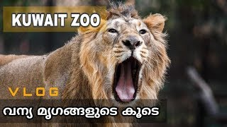 Kuwait Zoo /വന്യ മൃഗങ്ങളുടെ കൂടെ [VLOG]