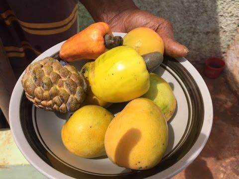 Organic Farm Tour in St. Elizabeth, Jamaica