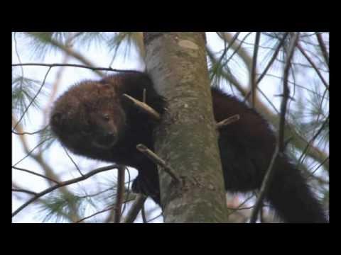 Beasts of Moyeha Bay - A Life on the Coast