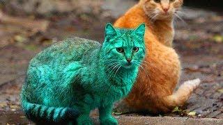 5 Razas de Gatos mas Peligrosas del Mundo