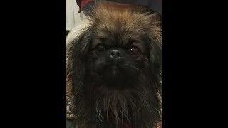 Что делают собаки когда хозяев нет дома