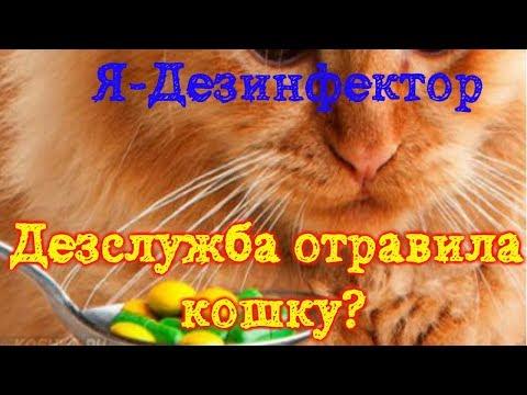 Дезслужба отравила кошку! Что делать?