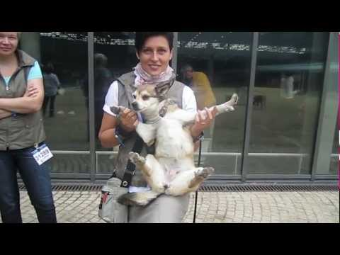 Lundehund - World Dog Show