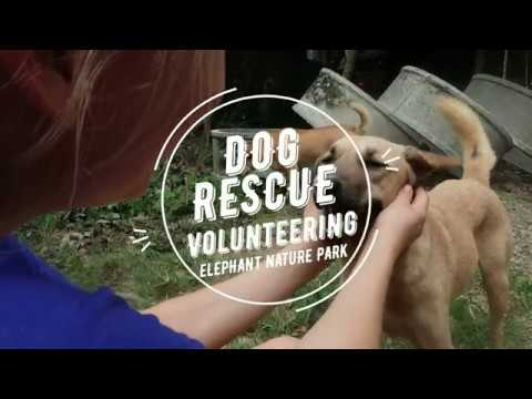 Travel Diaries: Dog Rescue Volunteering | Sarah Carlsen